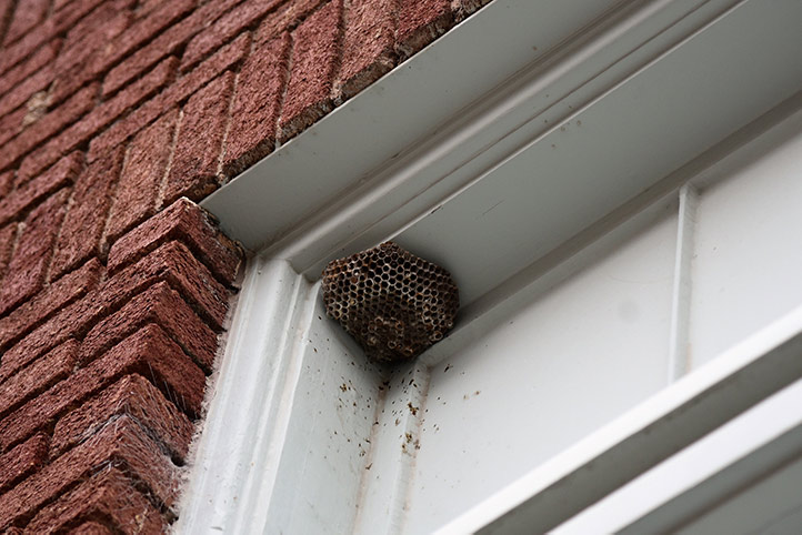 We provide a wasp nest removal service for domestic and commercial properties in Oxford.